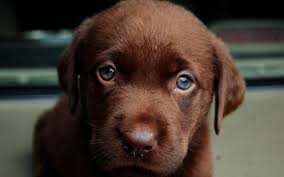 rode ogen bij een hond