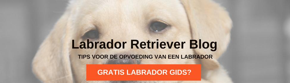 Labrador Retriever Geheimen